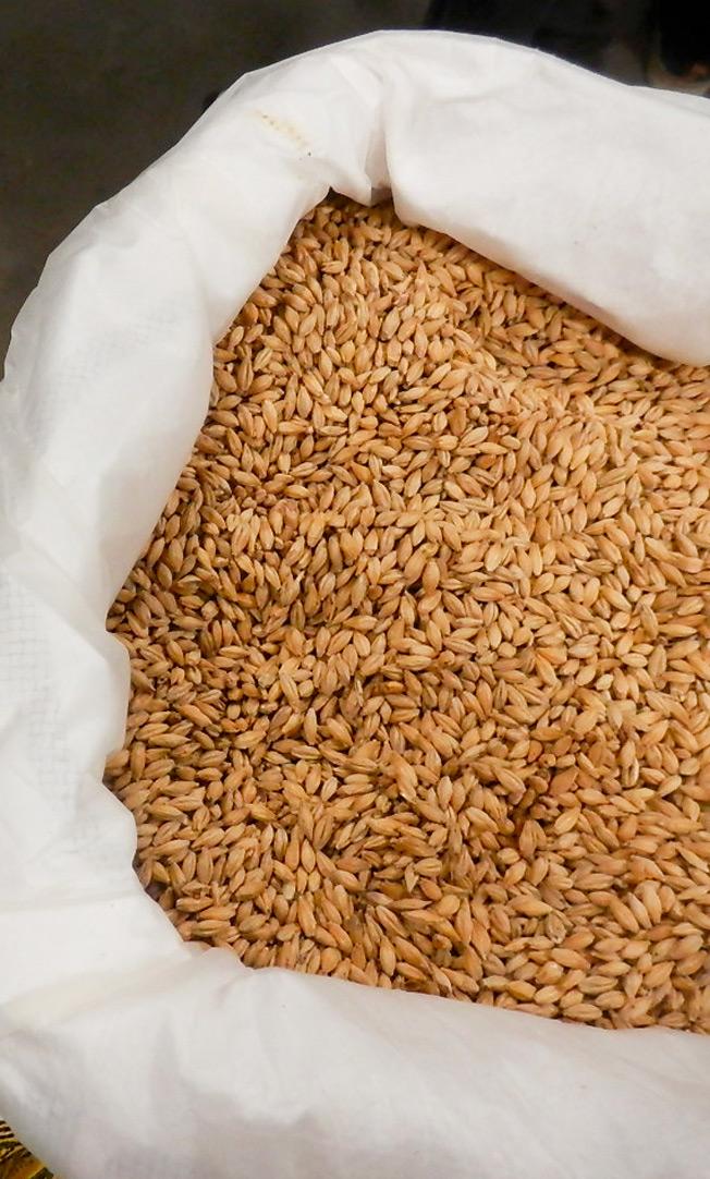brasserie-artisanale-bio-la-lie-photo-malt-crop